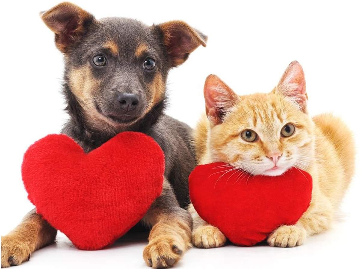 animaux de compagnie de la Saint-Valentin: les parents d'animaux font de la Saint-Valentin une fête spéciale pour leurs toutous