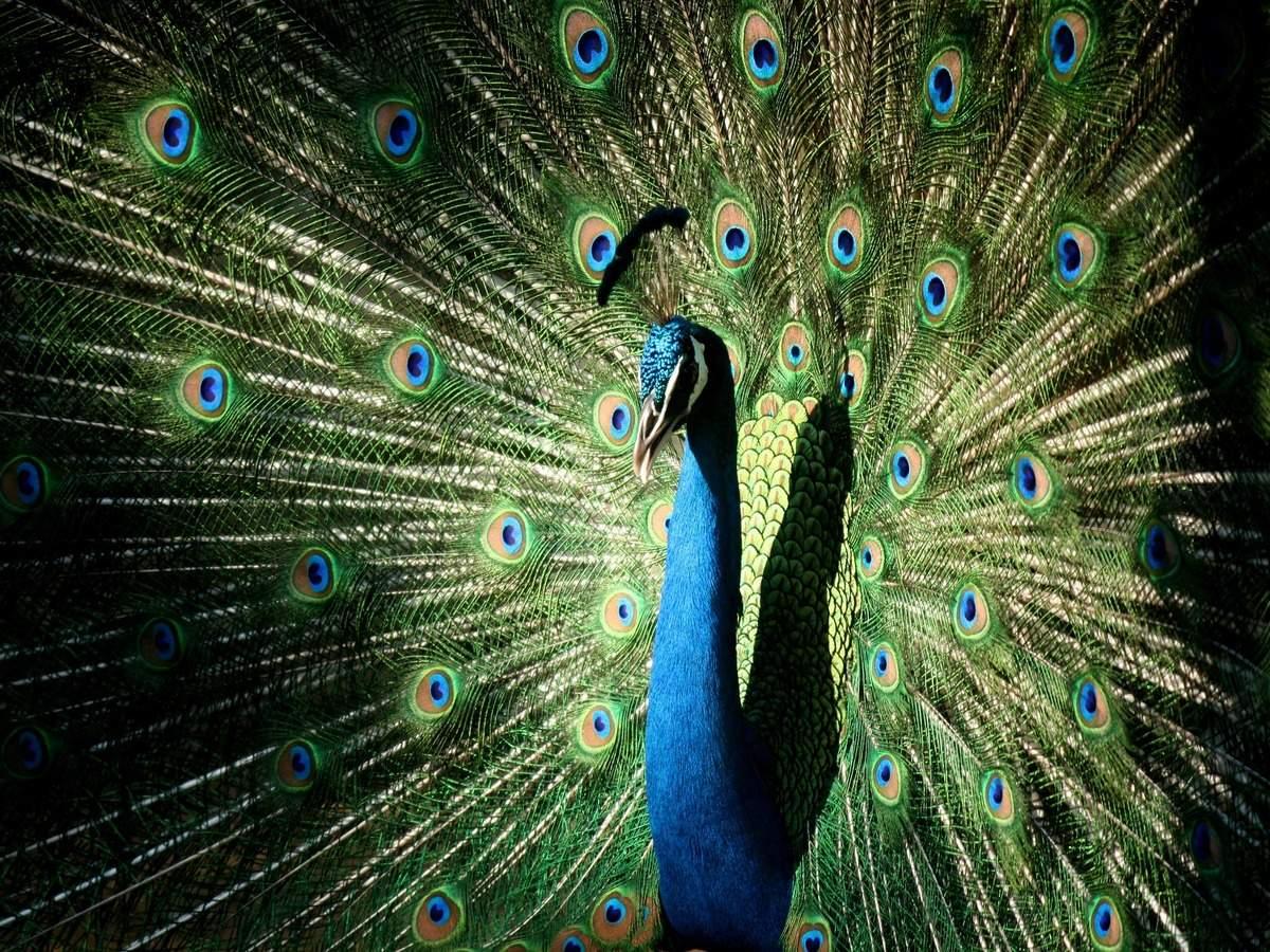 Mumbai's Byculla Zoo to reopen soon