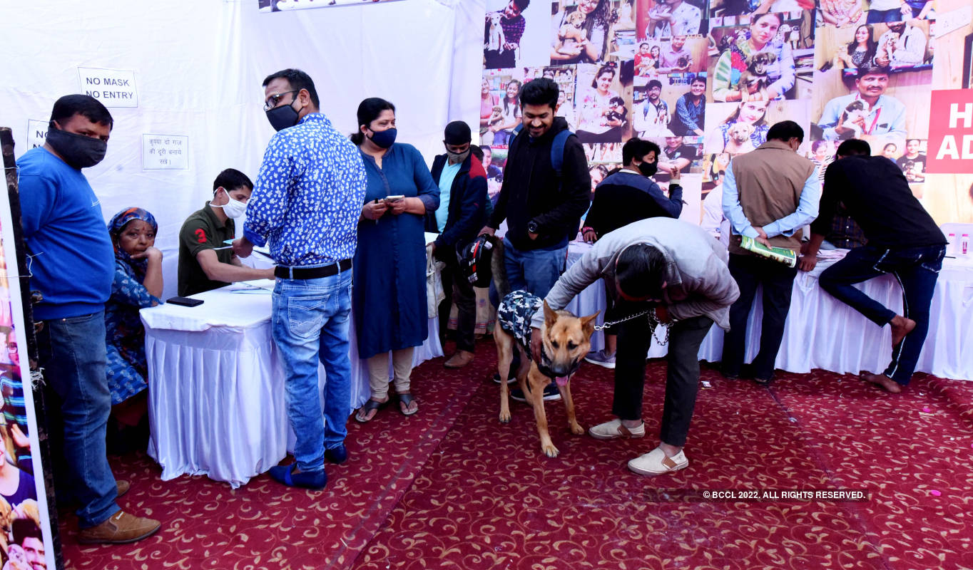 Dog lovers organise an adoption camp for homeless animals