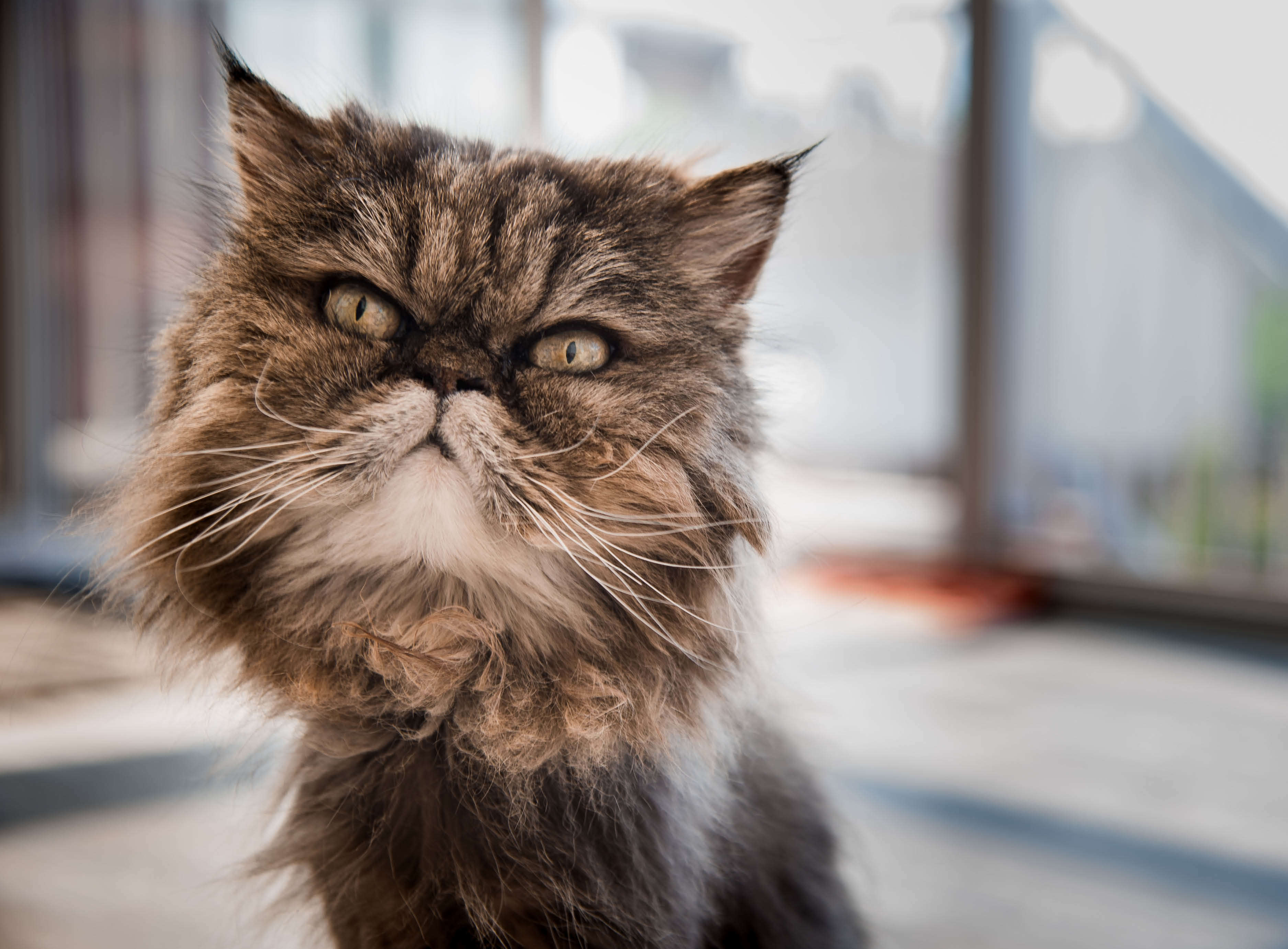 go-compare-pet-report-header-image