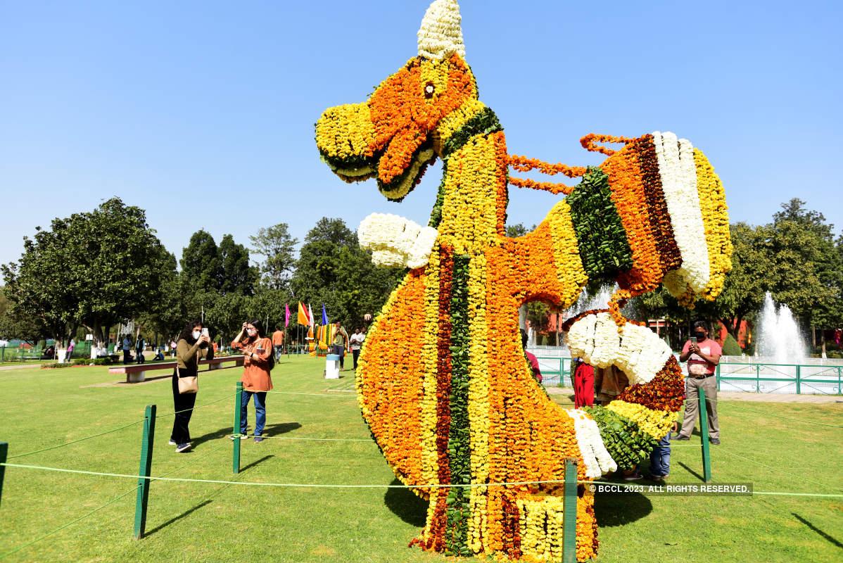 49th Rose Festival begins in Chandigarh