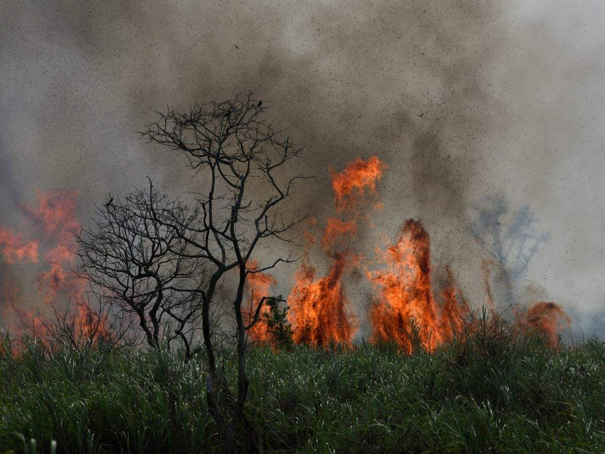 Odisha: Similipal Tiger Reserve burning for more than a week now