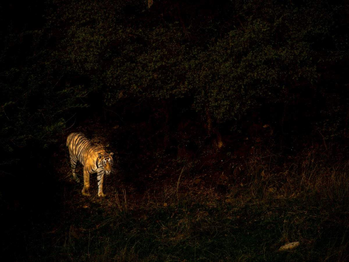 MP: You will now be able to enjoy night safaris in 3 national parks