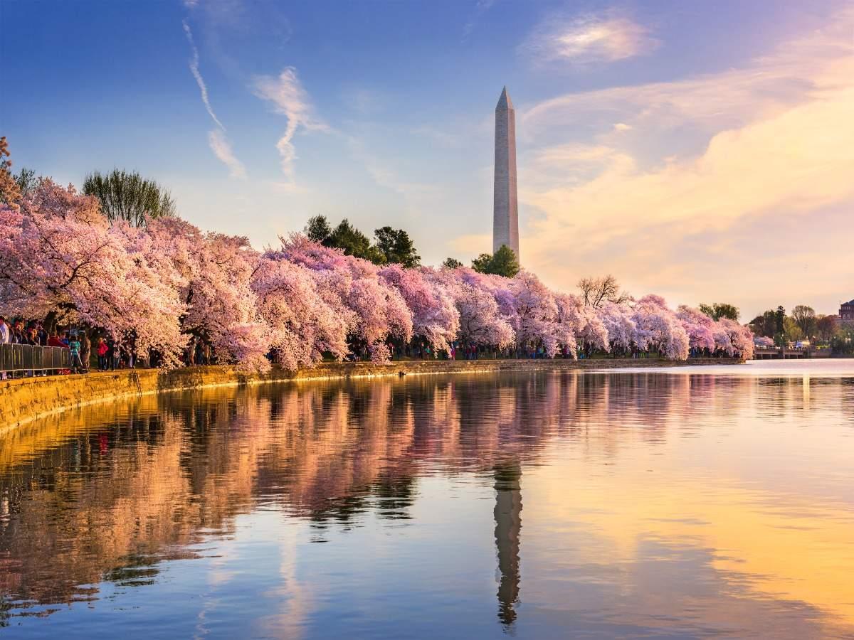 Login blossoms com Pearblossom Academy,