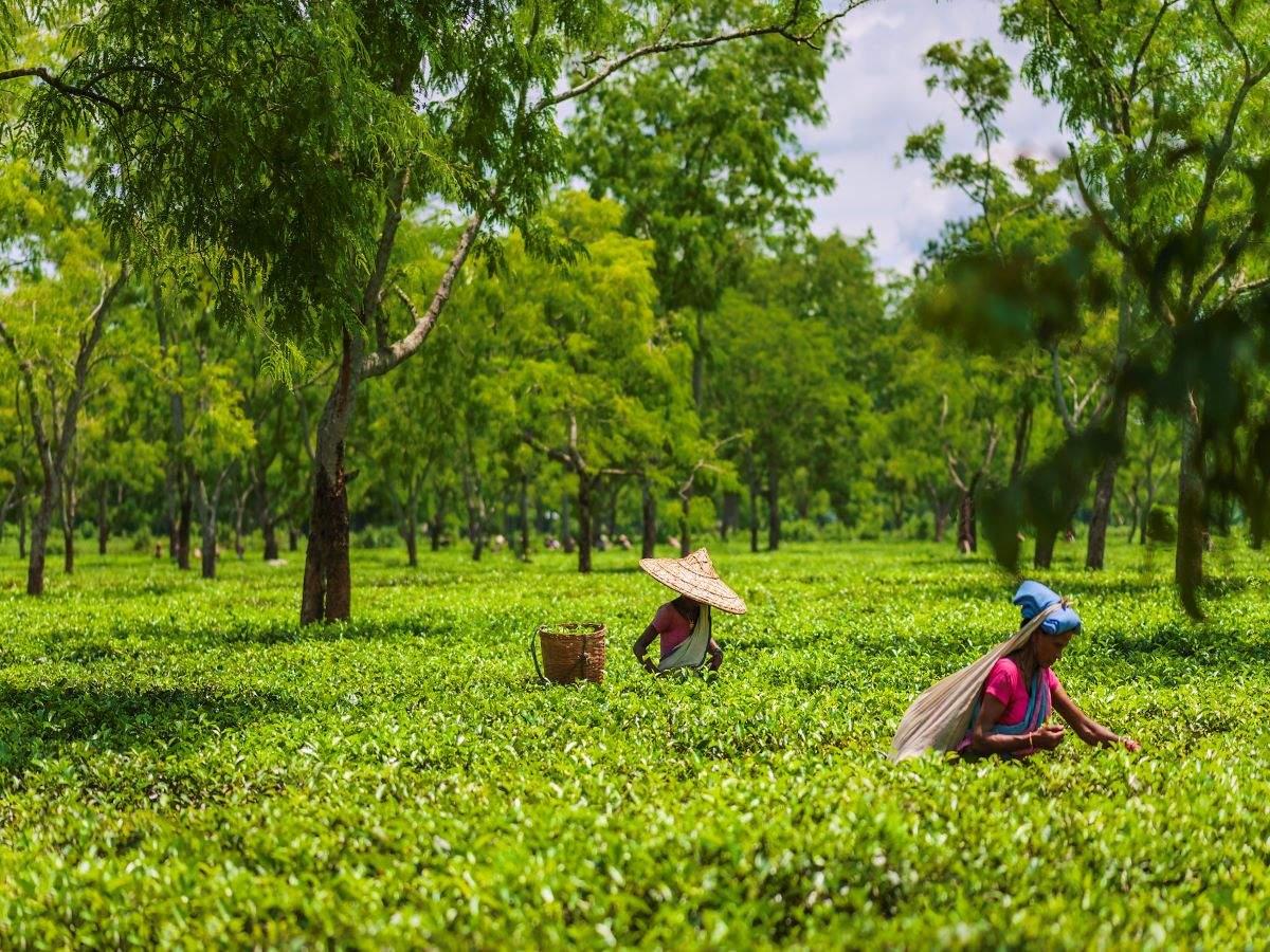 Assam: COVID negative report mandatory for those travelling from Mumbai, Bengaluru