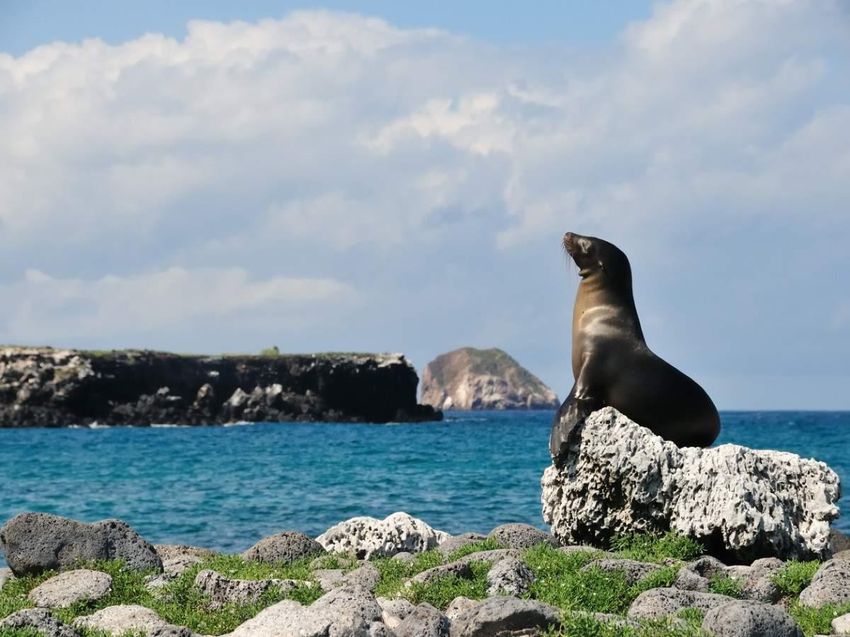 Leonardo DiCaprio pledges $43 million to restore Galpagaos Islands