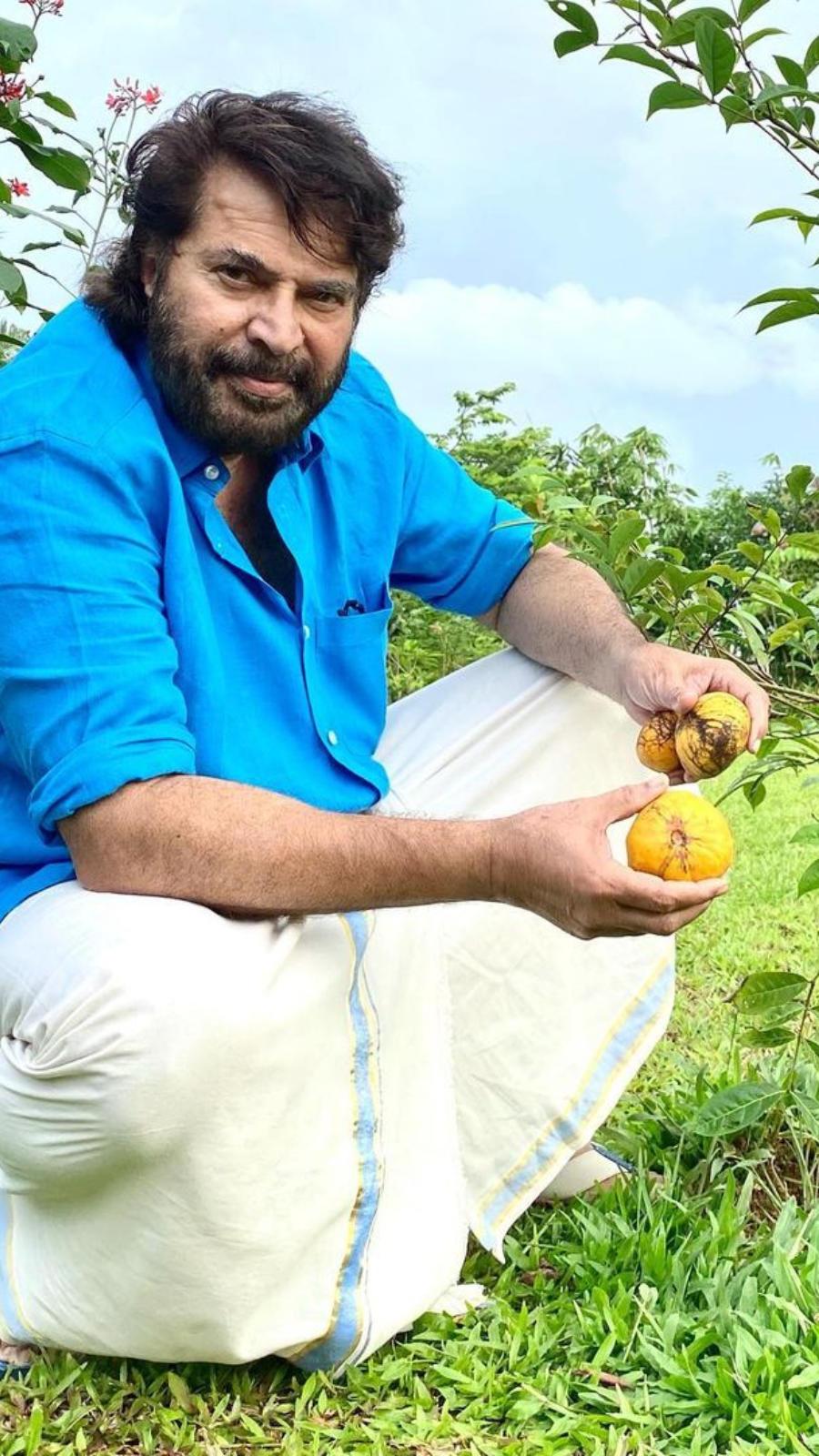 'Fruit'ful backyard