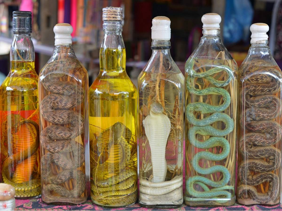 What is Snake Wine and everything you should know about it   The Times of  India