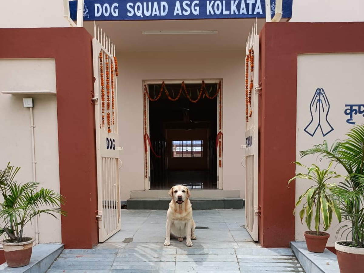 Photo of Photos: CISF dog squad's plush AC home with swimming pool