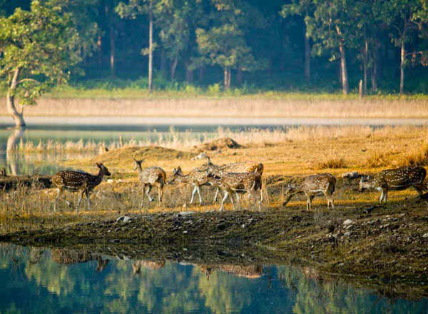 20 best National Parks for wildlife tourism in India
