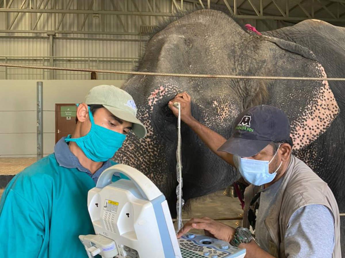 Elephant Hospital Mathura