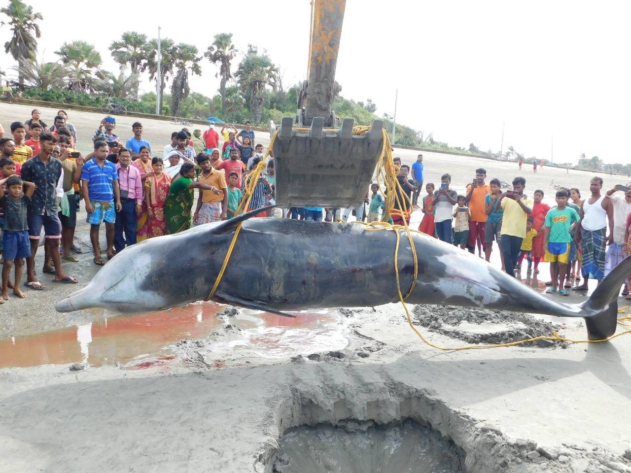 In pics: 5.3-metre-long whale washed onto Bengal beach