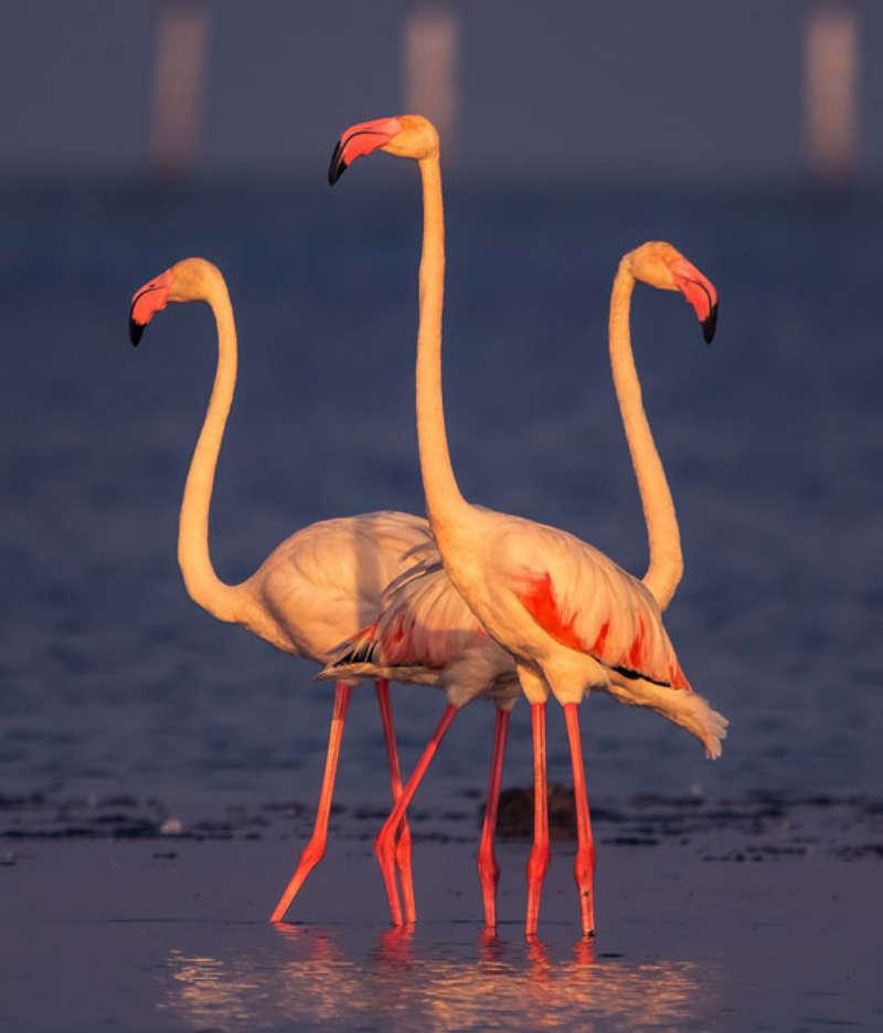 No Bird Lover Should Miss These Top Bird Sanctuaries in India