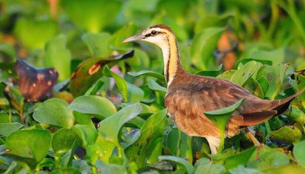 20 most magnificent bird sanctuaries in India for bird lovers