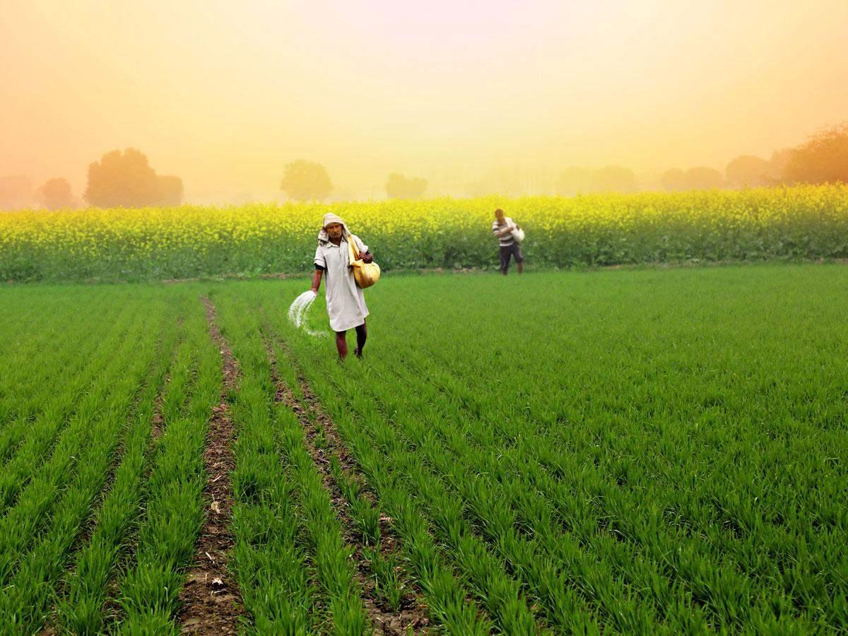 Public sector jobs drive women towards agriculture courses