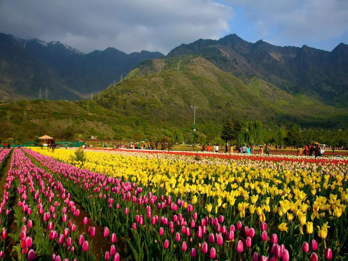 J&K tourism department lines up festivals to attract tourists