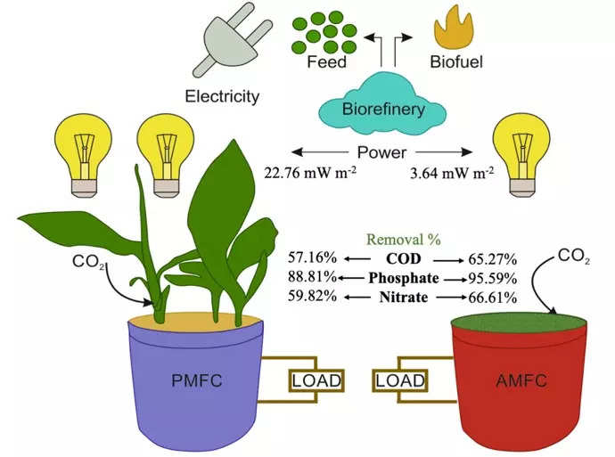 IIT Jodhpur researchers use plants to generate electricity from wastewater in microbial fuel cells