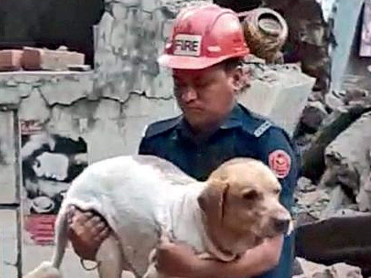 Pet Labrador Emerges Unhurt From Debris After Apartment Collapse