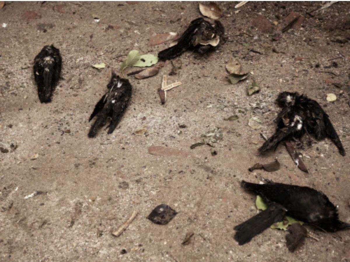 24 crows found dead in Delhi, 10 ducks too