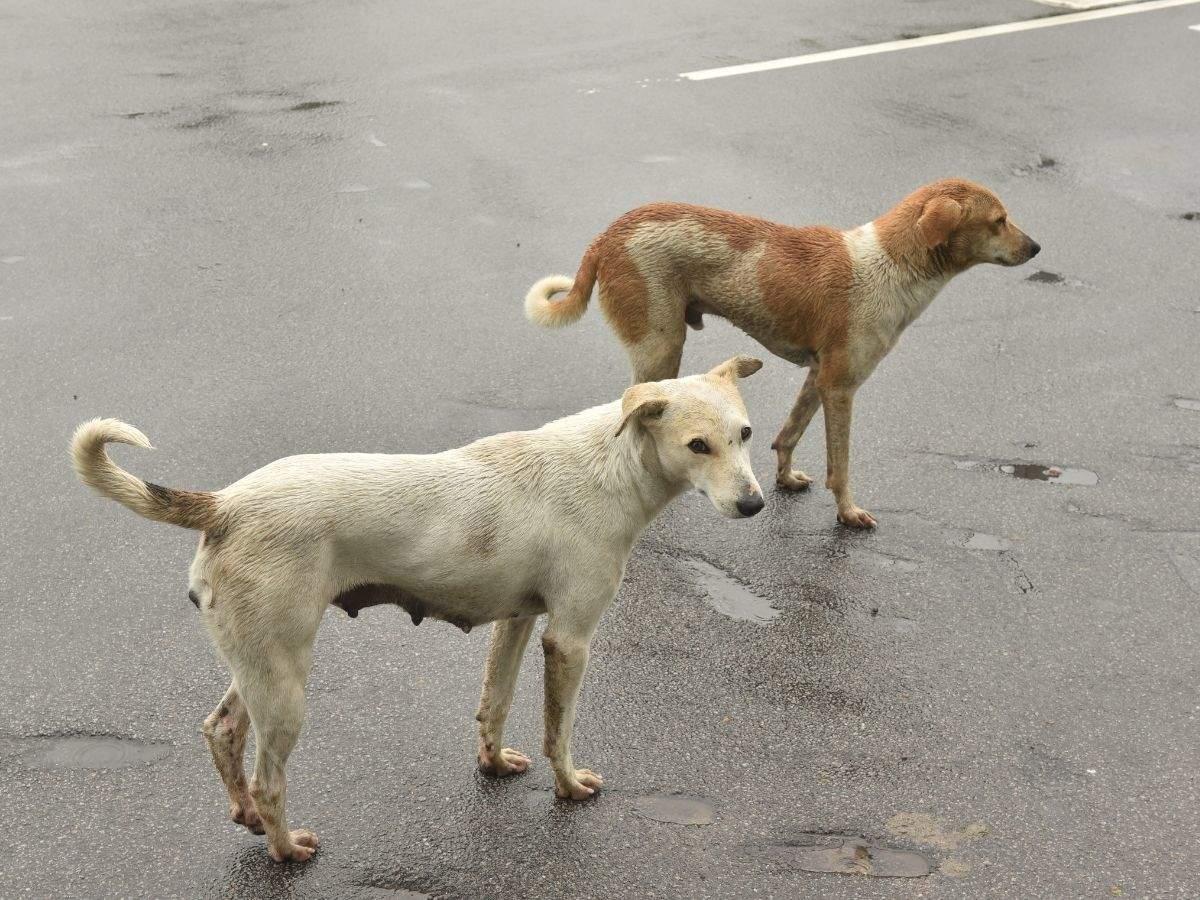 Stray dog burnt alive in Thane; case registered