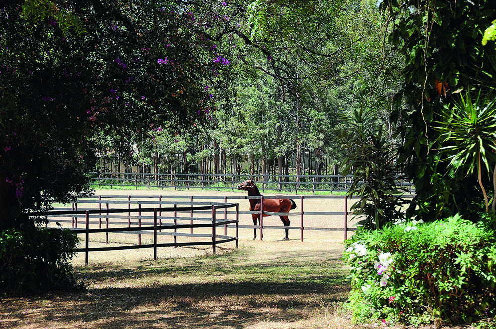 Mallya's stake in stud farm a dud investment