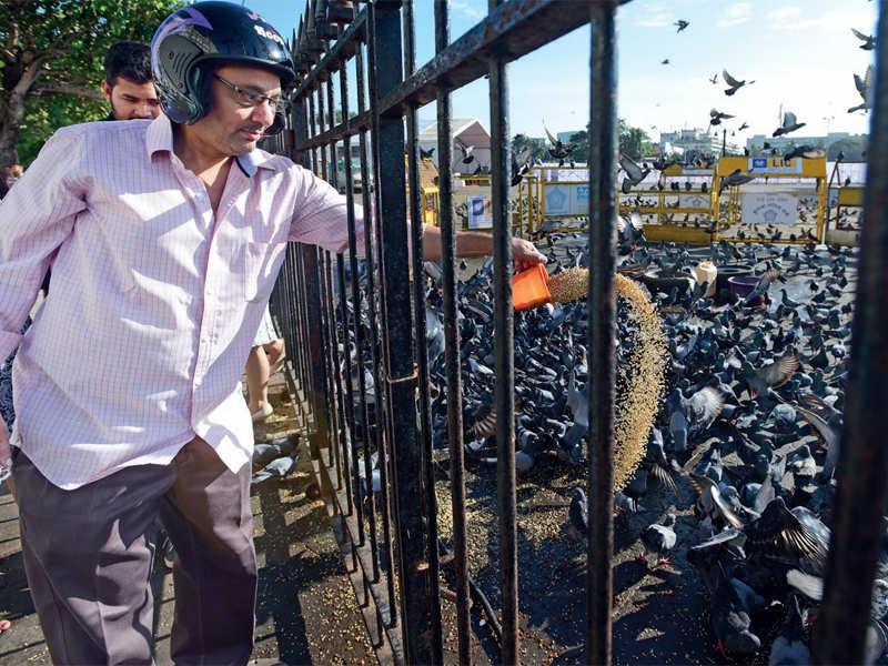 BMC's ban on feeding birds at Gateway causes a flutter