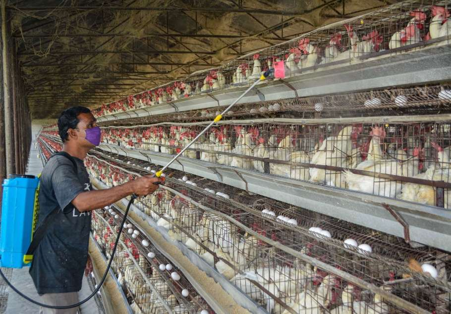 Bird Flu Scare Grips Companies, Government Says No Need to Panic: Highlights |  India News