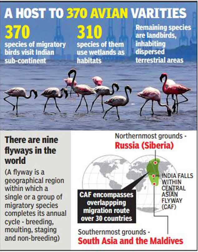 Central Asian Flyway