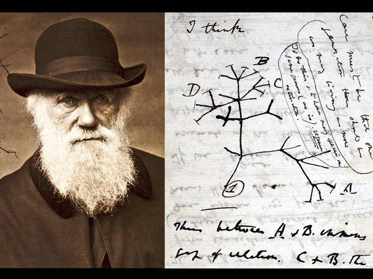 Charles Darwin's notebooks stolen from Cambridge