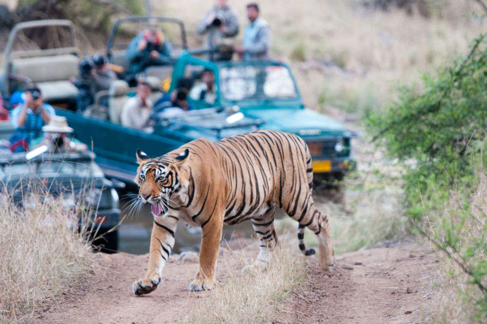 Tiger spotting in Bandhavgarh