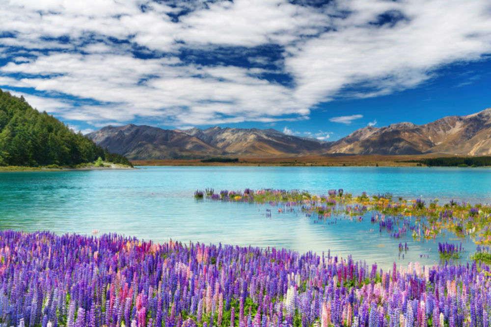 Kiwi spirit in New Zealand