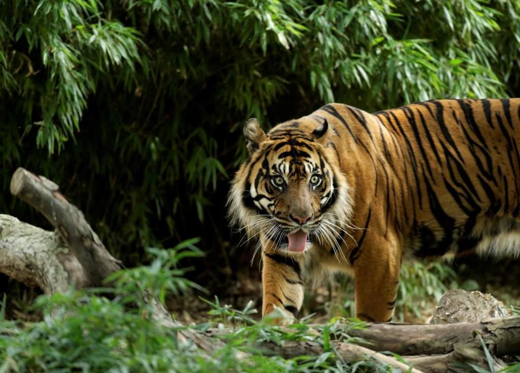 India's 7 best safari spots