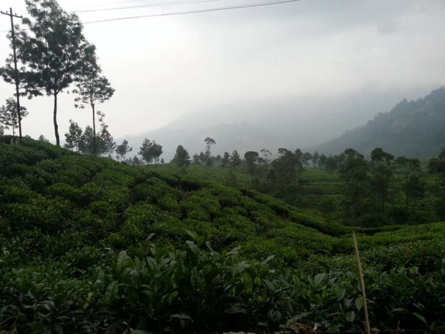 Munnar: Of hills, tea gardens and wildlife