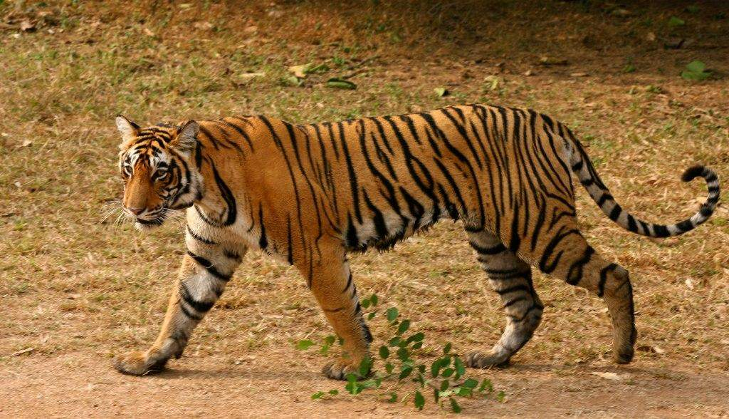 Ranthambore National Park: Call of the wild