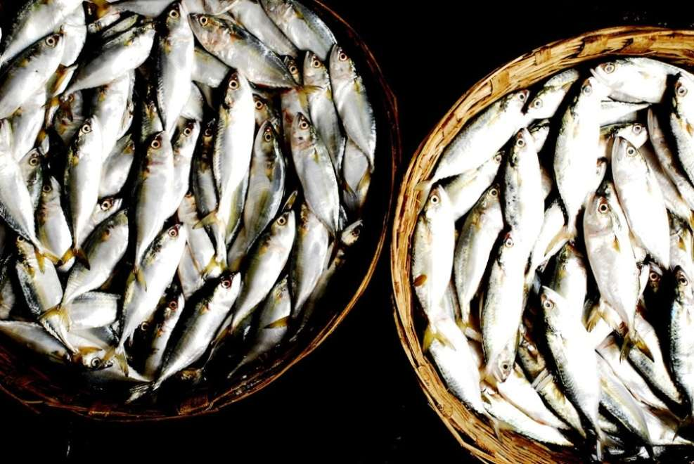 Chapora fish market