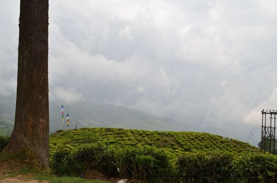 Happy Valley Tea Estate