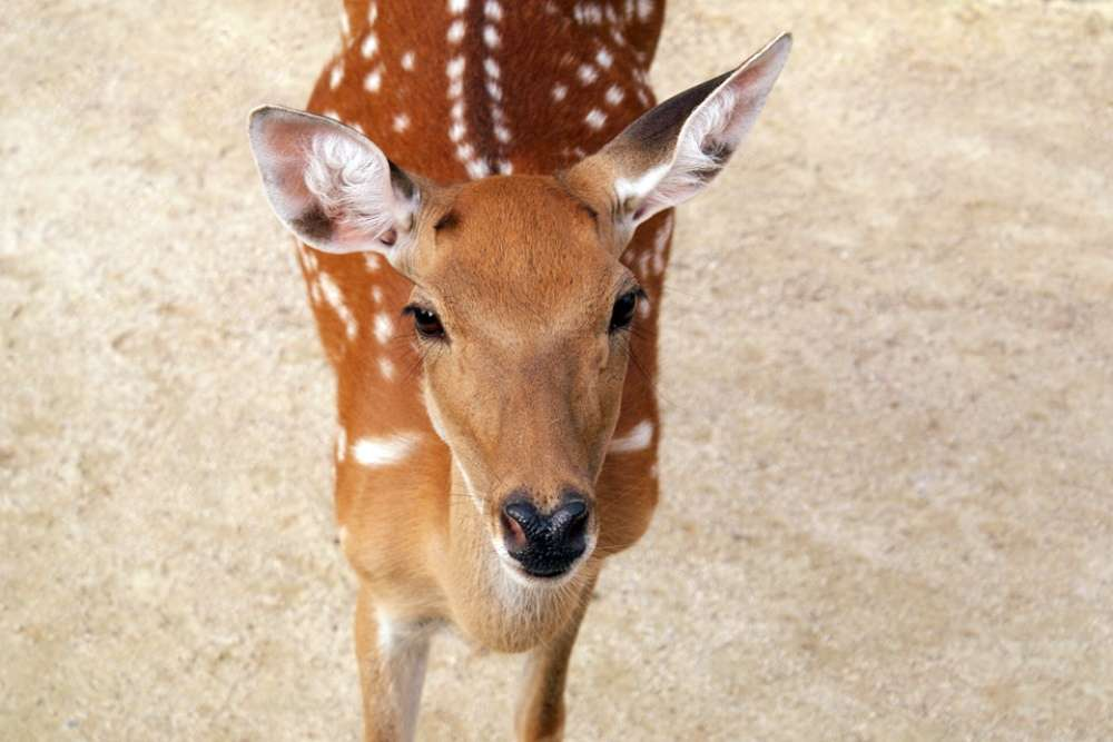 Benog Wildlife Sanctuary