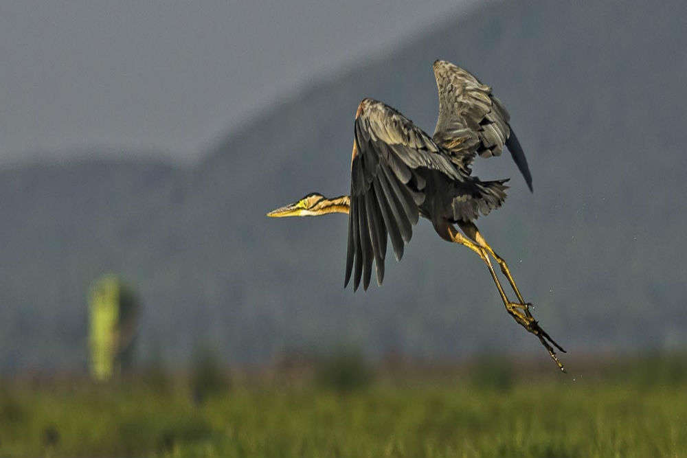 West Bengal for the nature lover