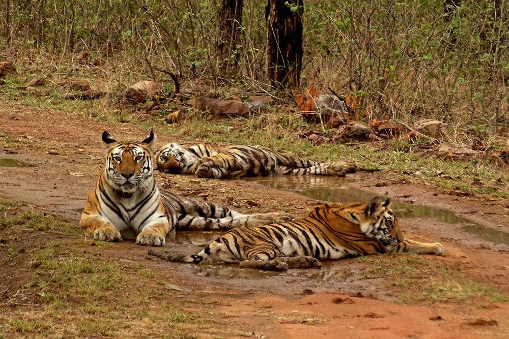 Going wild in Madhya Pradesh