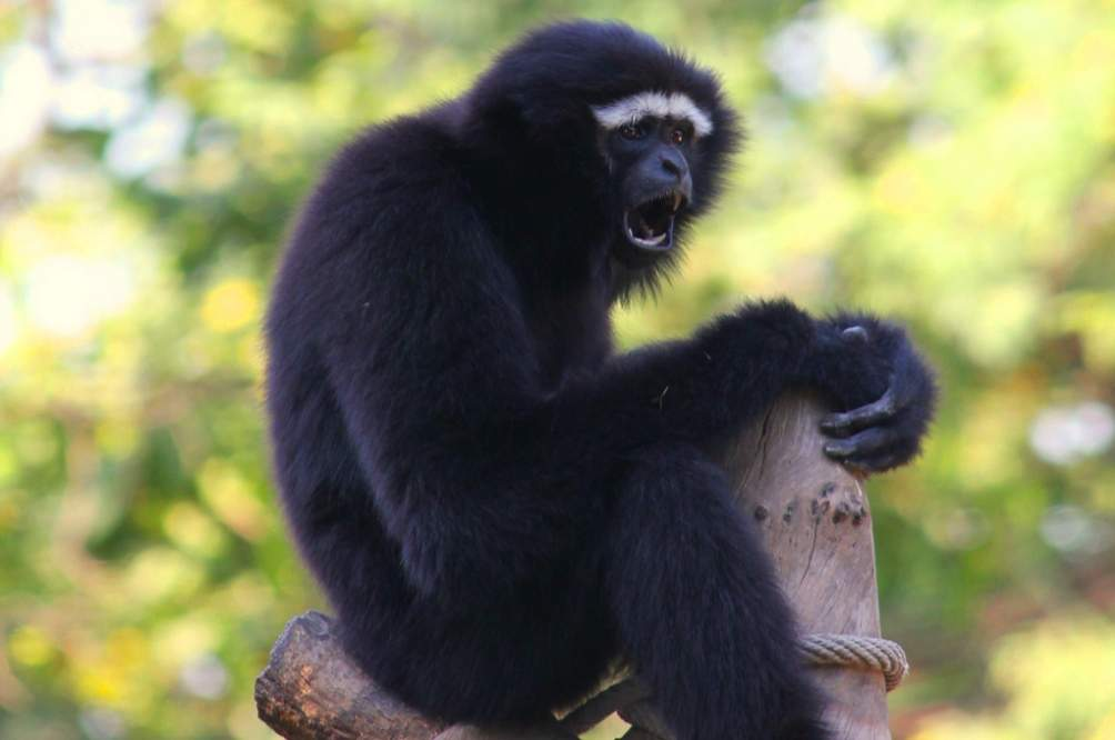 The Hoollongapar Gibbon Sanctuary