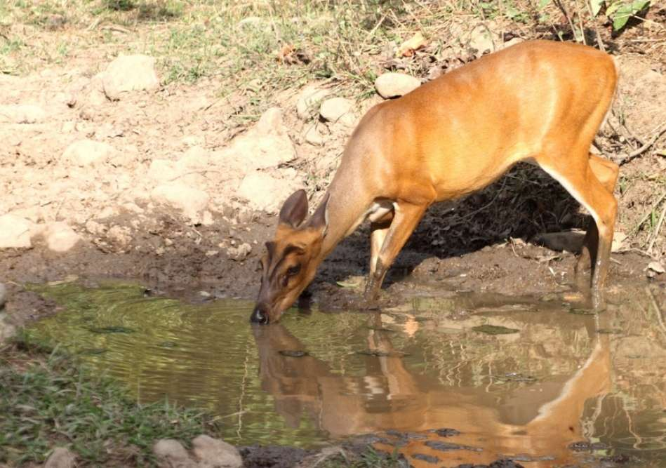Garampani Wildlife Sanctuary