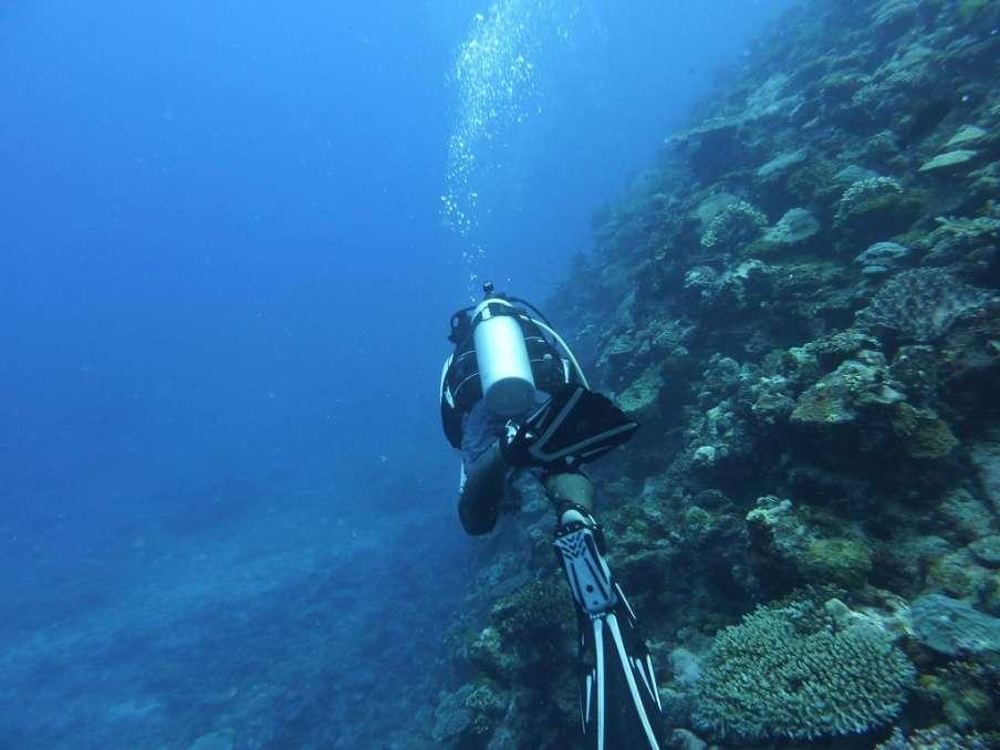 Scuba Diving At the Fiji Islands