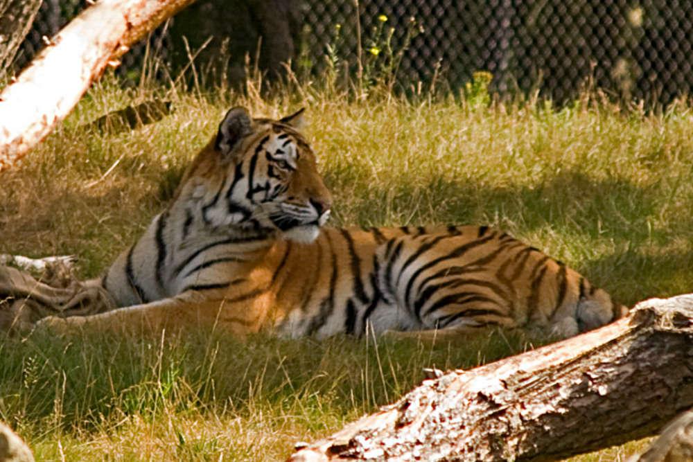 Tiger-spotting in Corbett
