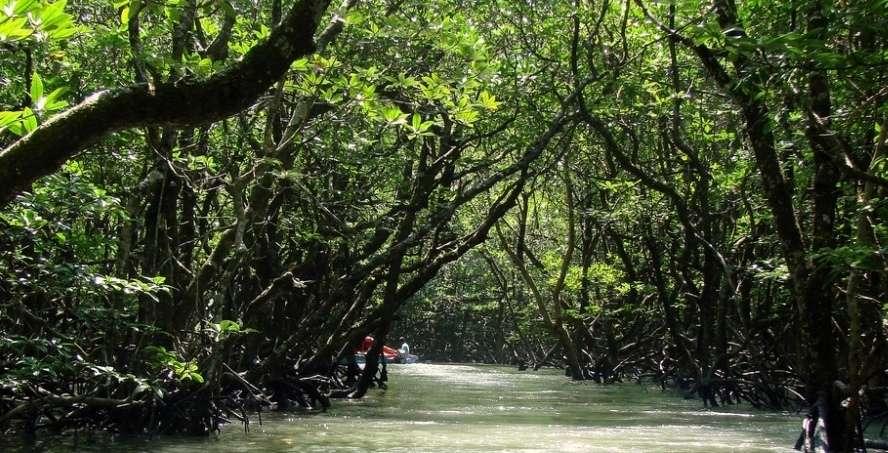 Mangrove creek, Baratang Island