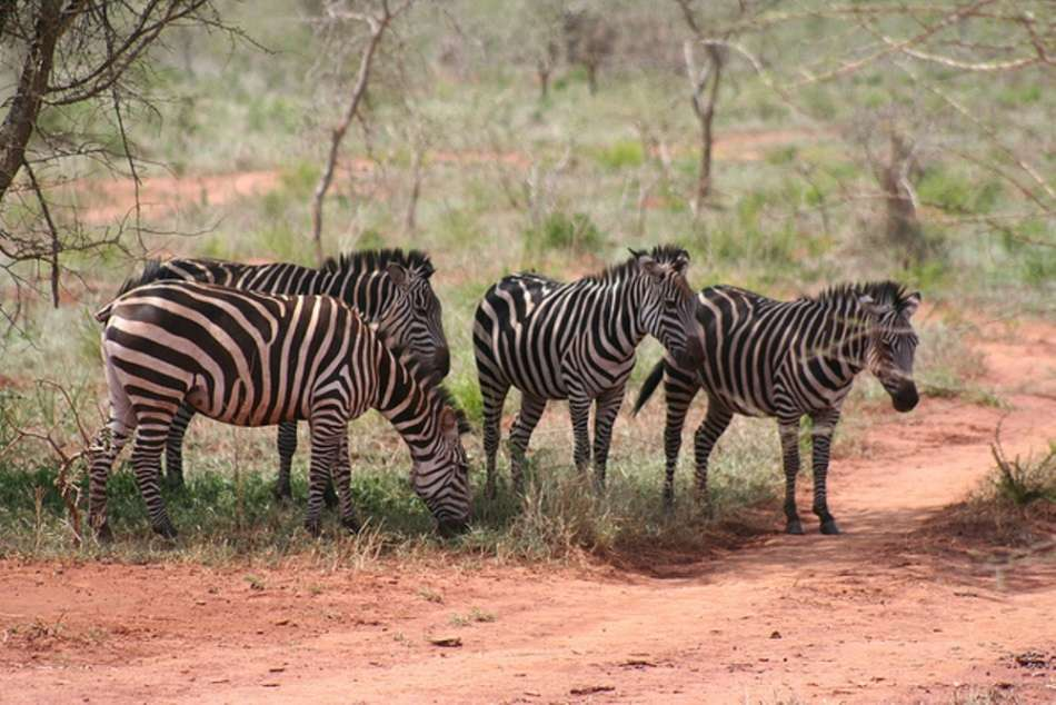 Great safari holidays