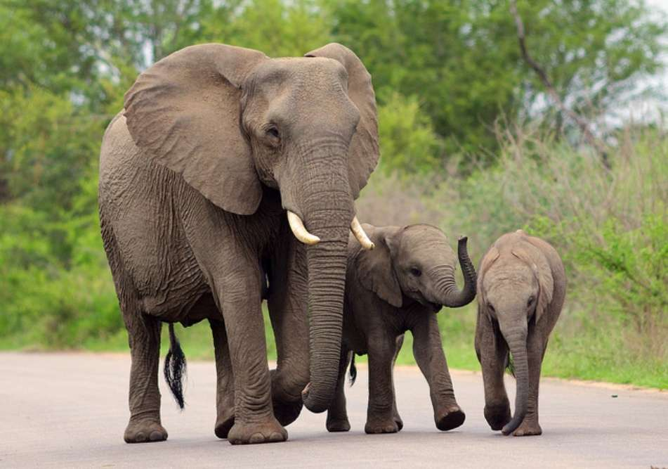 Self-drive safari in the Kruger National Park