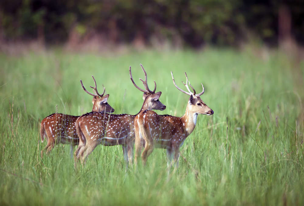 Wildlife spotting in North India