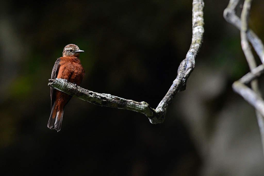 Asa Wright birdwatching
