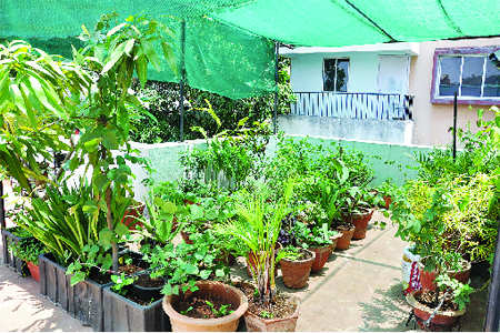 Terrace gardens with organic farming a fad times of india for Terrace vegetable garden india
