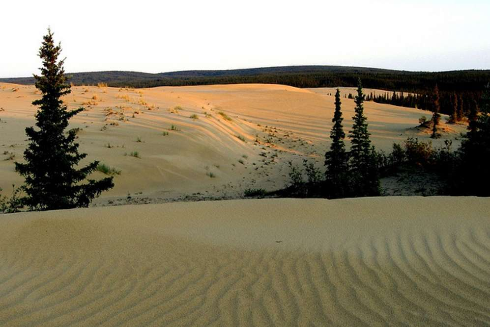 The Great Kobuk Sand Dunes—an Alaskan oddity